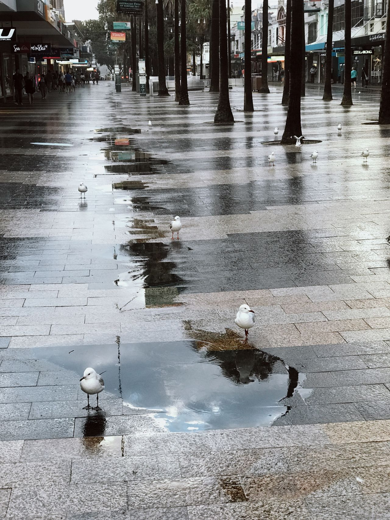Bird Water Puddle Wet Outdoors Animal Themes Animals In The Wild City No People Day Natural Disaster Nature