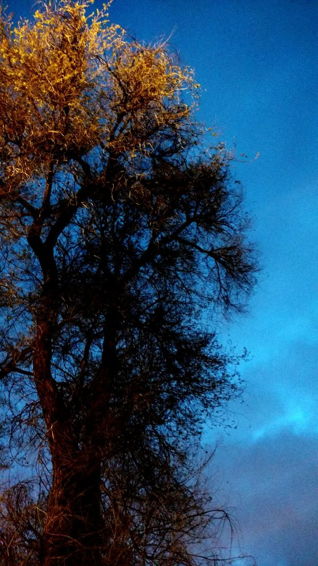Tree at dusk Treelovers Tree Branches Tree Art Tree Porn Trees And Sky Treescollection Tree Trees TreePorn Tree_collection  Tree And Sky Treetastic Trees Collection Treecollection Trees Collection Treehugger Tree Junkie Tree At Night Tree At Dusk Tree And Spring Nature's Diversities
