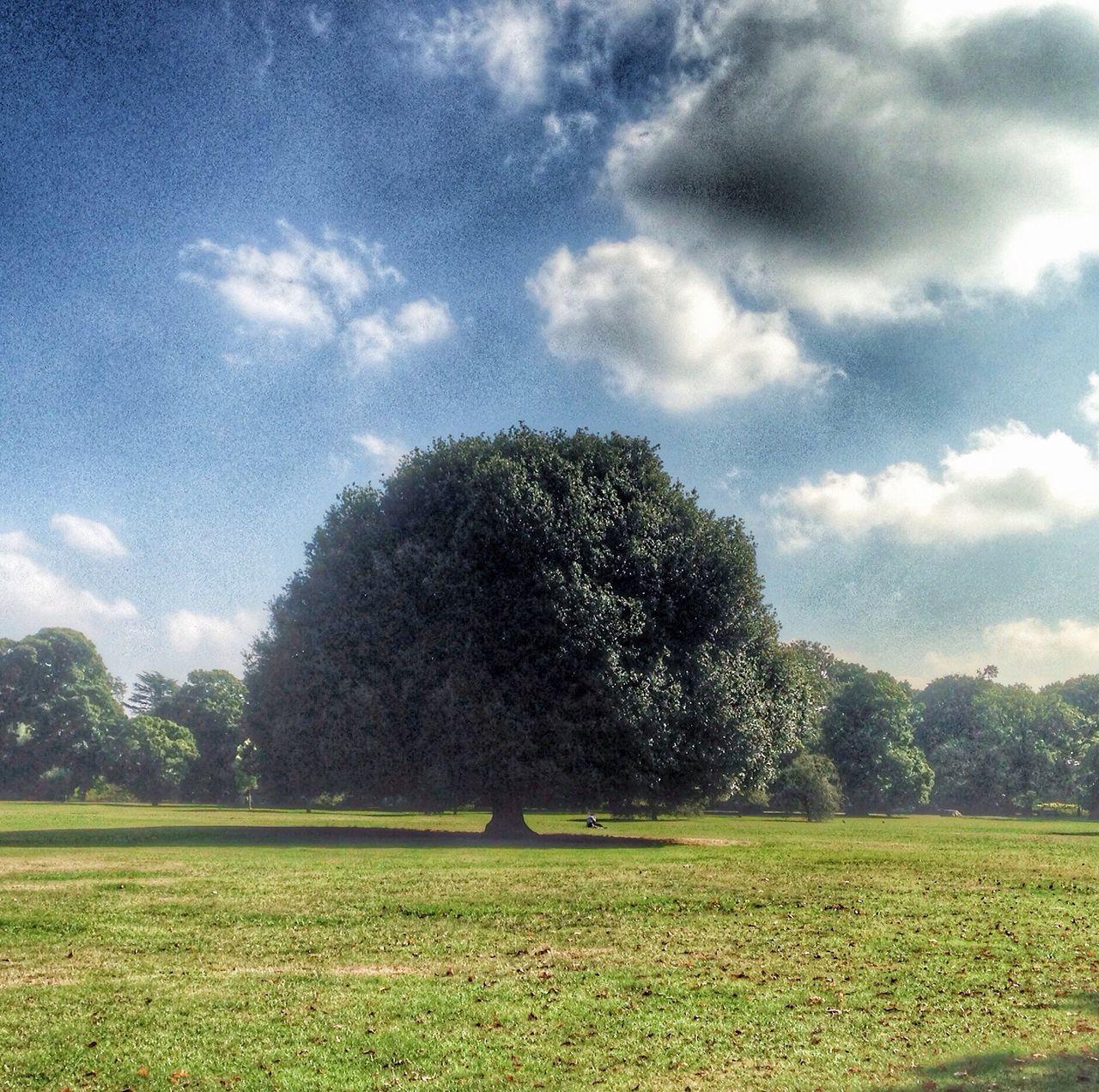 Tree Tranquil Scene Grass Growth Green Color Scenics Landscape Beauty In Nature Non-urban Scene Day London Greenwich Park