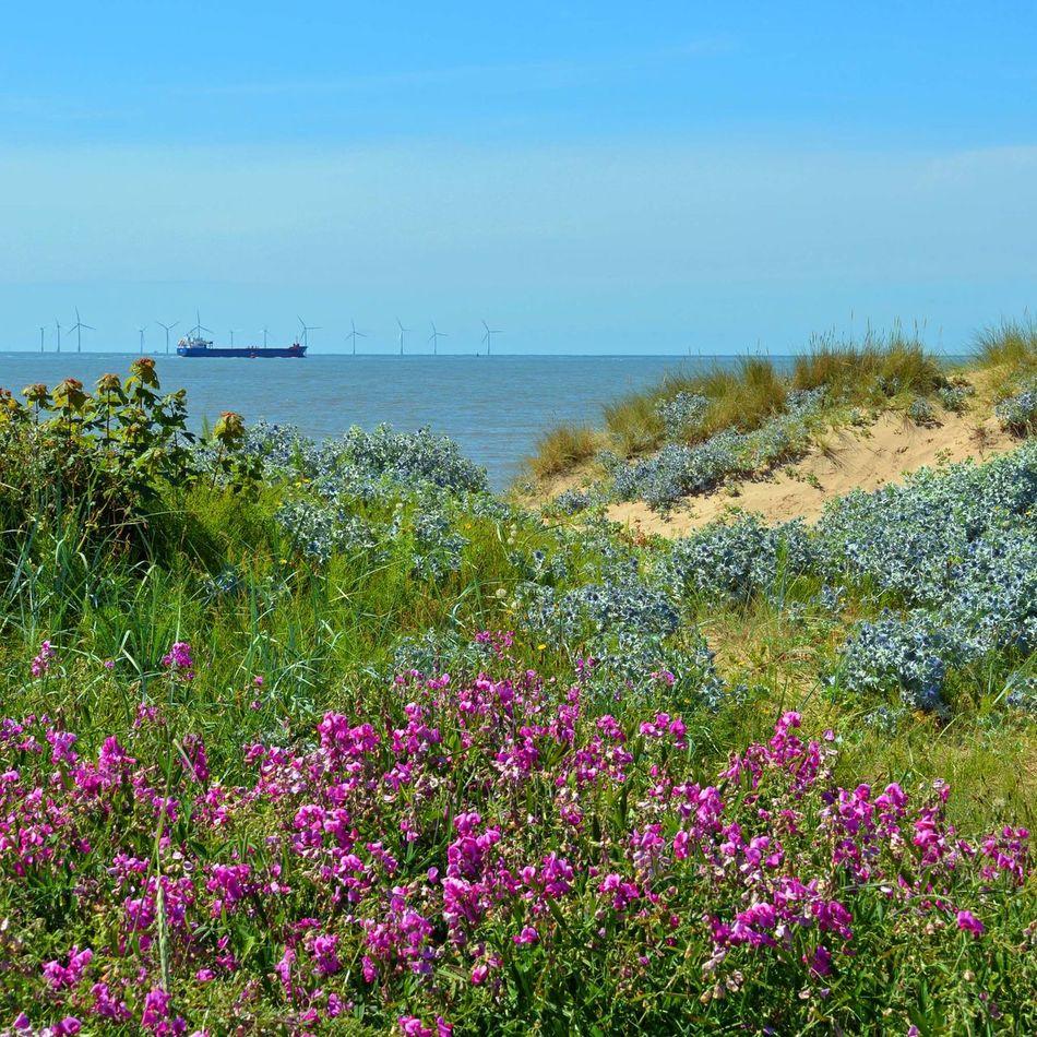 A glorious summer day at Crosby beach. Crosby IronMen Crosby Beach Sefton Coast