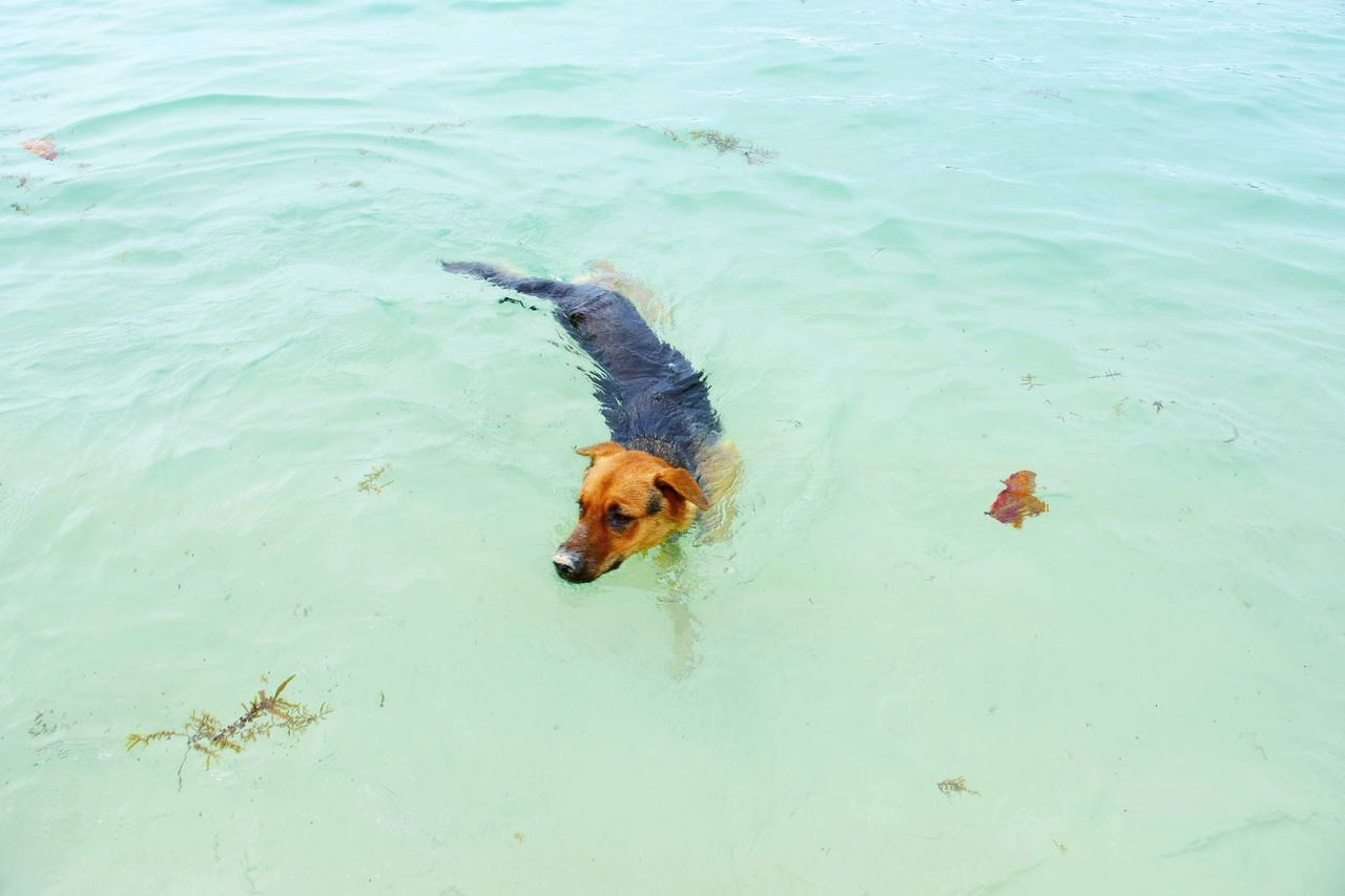 We Asians believe that dogs are the guardians of beaches and mountains. They protect us from the evil spirits. Swimming Water High Angle View Animal Themes One Animal Dog Dog Swimming Dog❤ Dog Lover Sabah Malaysia Sabah Borneo