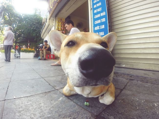 A dog near the church Gopro GoPro Hero3+ Taking Photos Check This Out Hello World Cheese! Enjoying Life Style Relaxing Hanoi Dog Hanoi Vietnam  Hanging Out Walking Around Day Summer Love Life Look Happy Hanoian Part Of Me