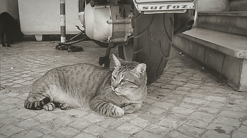 One Animal Feline Outdoors Stray Cat City Life City Cat Lonely Hard Life