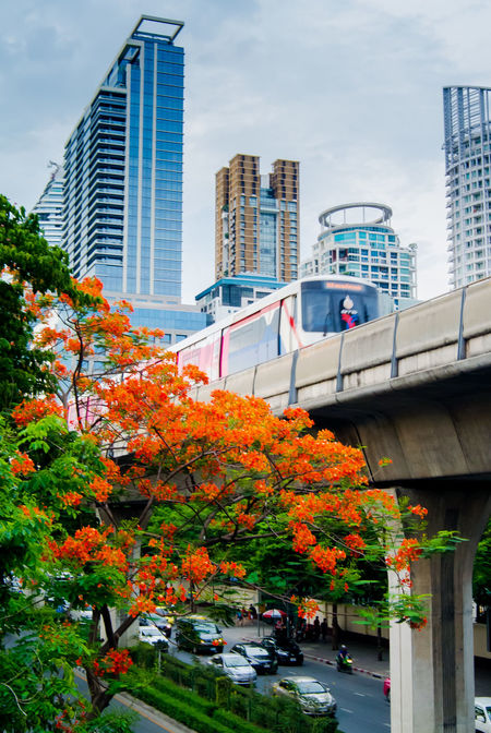 Flame Tree, Royal Poinciana flower with cityscape background Architecture Bloom Blossom Building Exterior City City Life City Street Cityscapes Flam-boyant Flame Tree Floral Flower Green Metropolis Modern No People Orange Color Outdoors Royal Poinciana Sky Train Skyscraper Tower Tree Tropical View