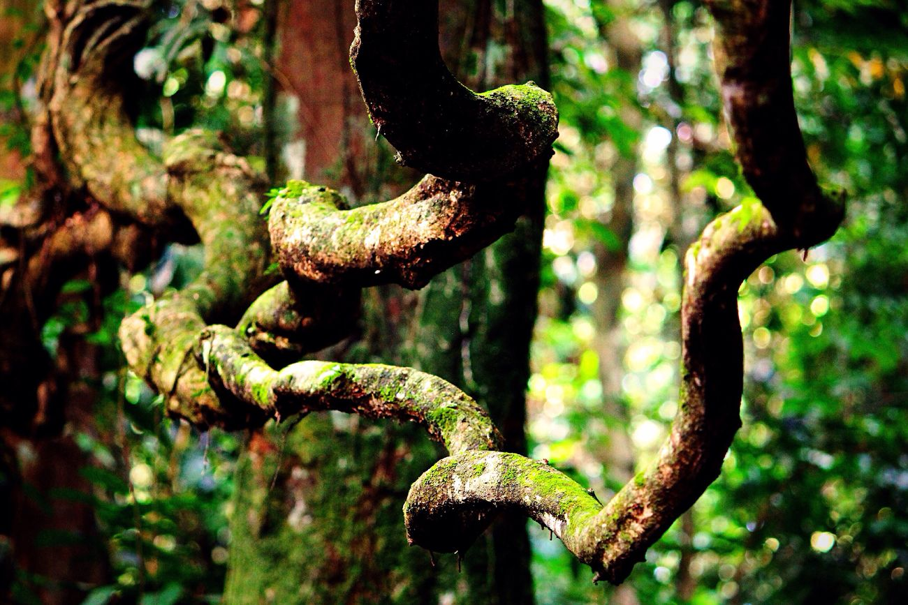 """""""Fais ton bien avec le moindre mal d'autrui qu'il est possible"""", Rousseau Africa Tropical Climate Tropical Paradise Nature Nature_collection Tropical Plants Liana Hood Tropical Colors Green Green Color"""