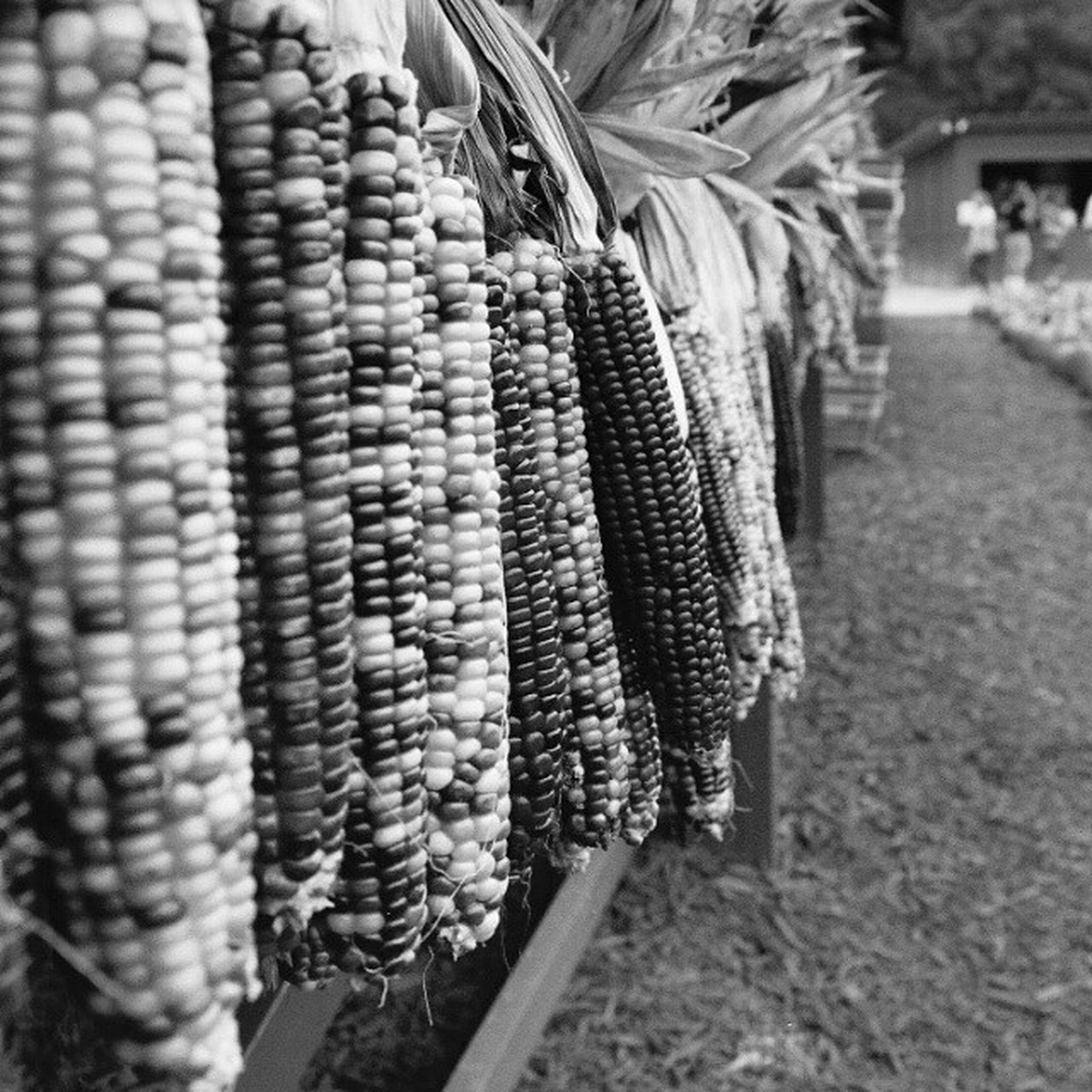 for sale, retail, focus on foreground, market stall, market, large group of objects, food, freshness, food and drink, abundance, close-up, hanging, day, outdoors, healthy eating, selective focus, in a row, variation, basket, choice
