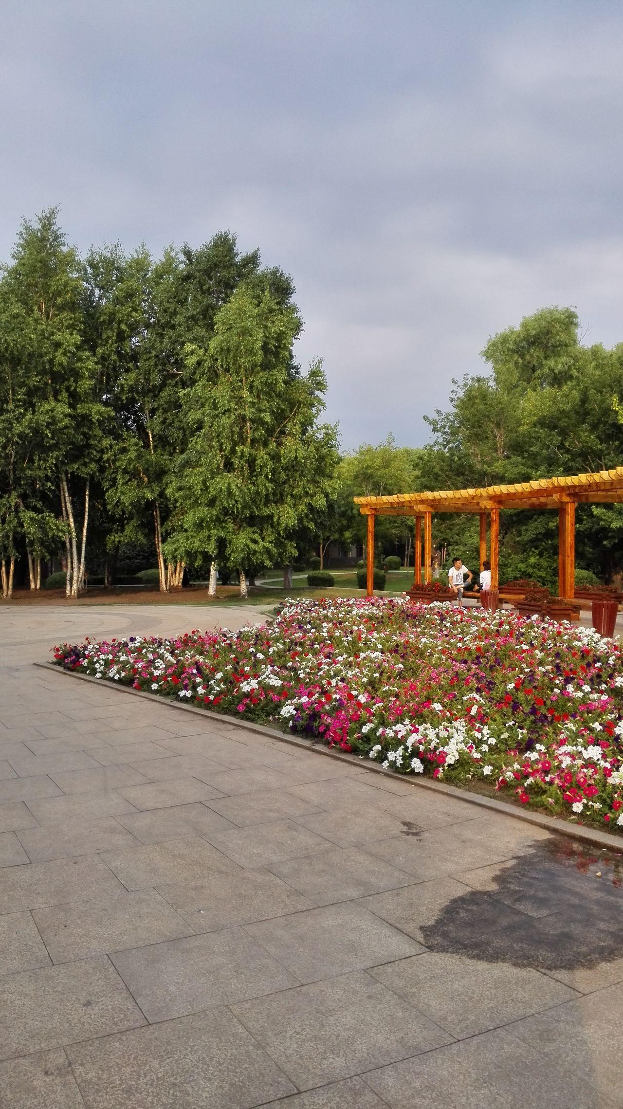 Outdoors Tree Day Flower Travel Destinations Nature Sky China Haerbin