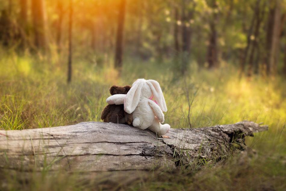 Beautiful stock photos of osterhasen, Animal Representation, Australia, Childhood, Day