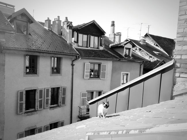 Friend Roof Catoftheday Curious Cat Walking On The Roof From My Point Of View Enjoying The View Old Town Old Buildings Street Photography Neighborhood Rooftop Scenery