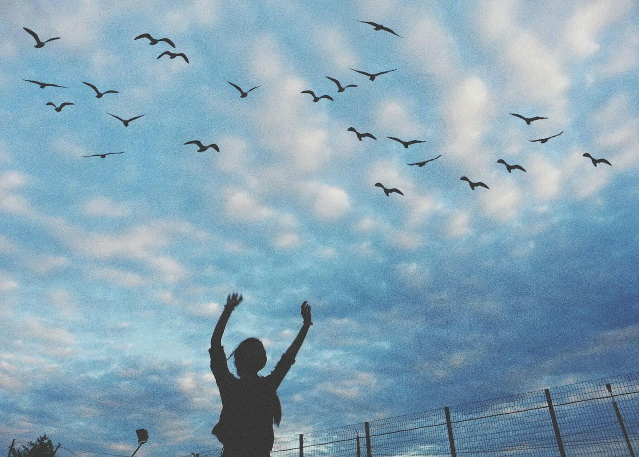 large group of animals, flying, sky, real people, silhouette, bird, flock of birds, cloud - sky, low angle view, one person, leisure activity, mid-air, animals in the wild, lifestyles, men, outdoors, nature, day, sunset, spread wings, people