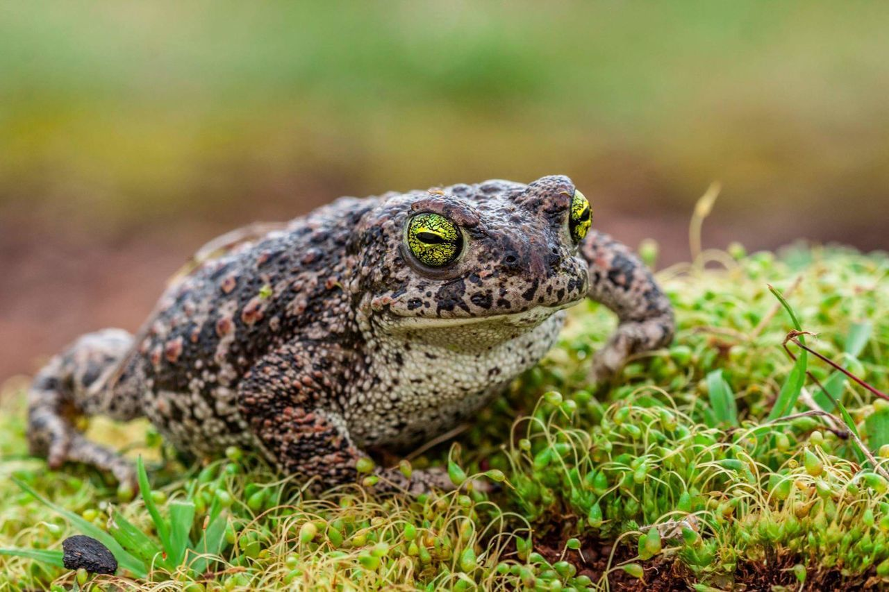 One Animal Animals In The Wild Animal Wildlife Outdoors Close-up Day Nature Frog No People Freshness Nature Beauty In Nature Anfibio