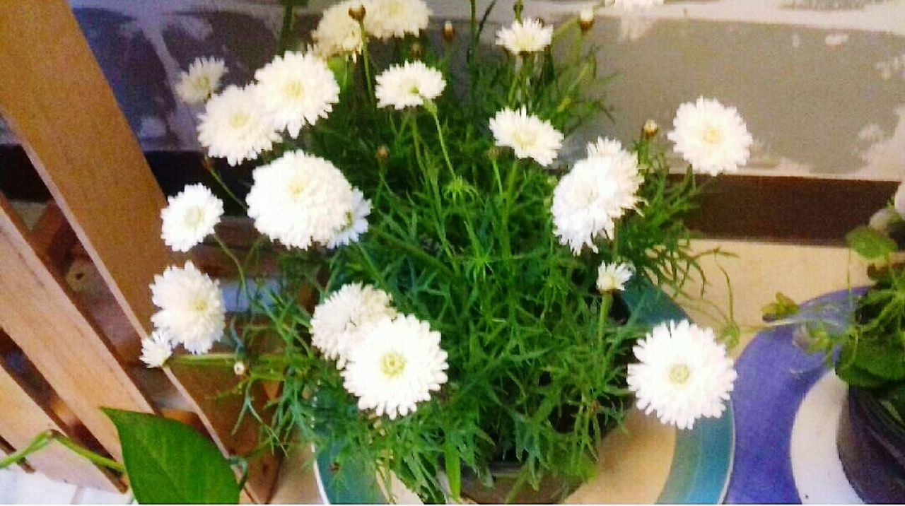Flower Growth Nature Plant Outdoors Flower Head Day Freshness Fragility Close-up No People White Color Flower White Flowers,Plants & Garden Flowers, Nature And Beauty