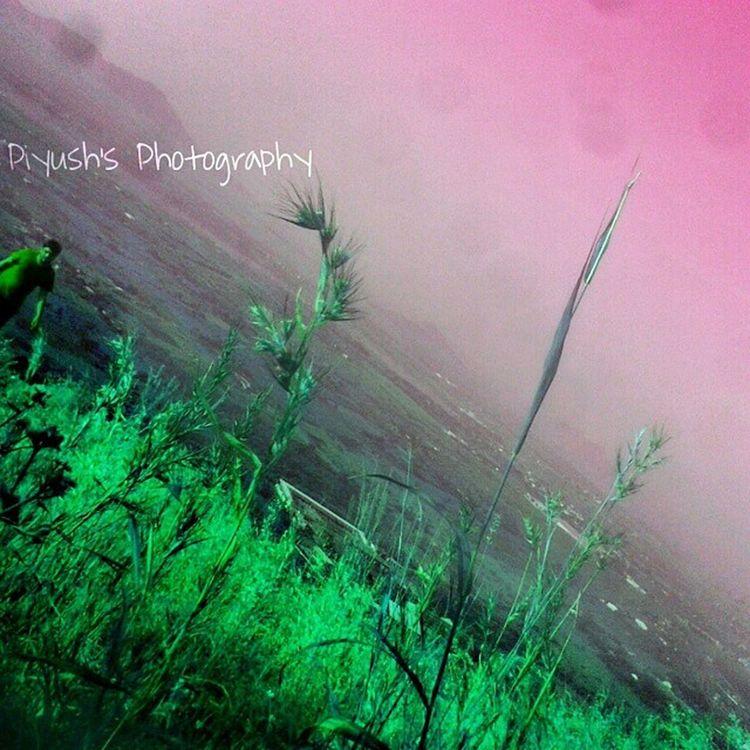 Picsart HDR Hdrpics Trekking Fun Morning Nashik Nashikgram Grass Piyush_photography Sunrise Calm Fresh Peace Pandavleni