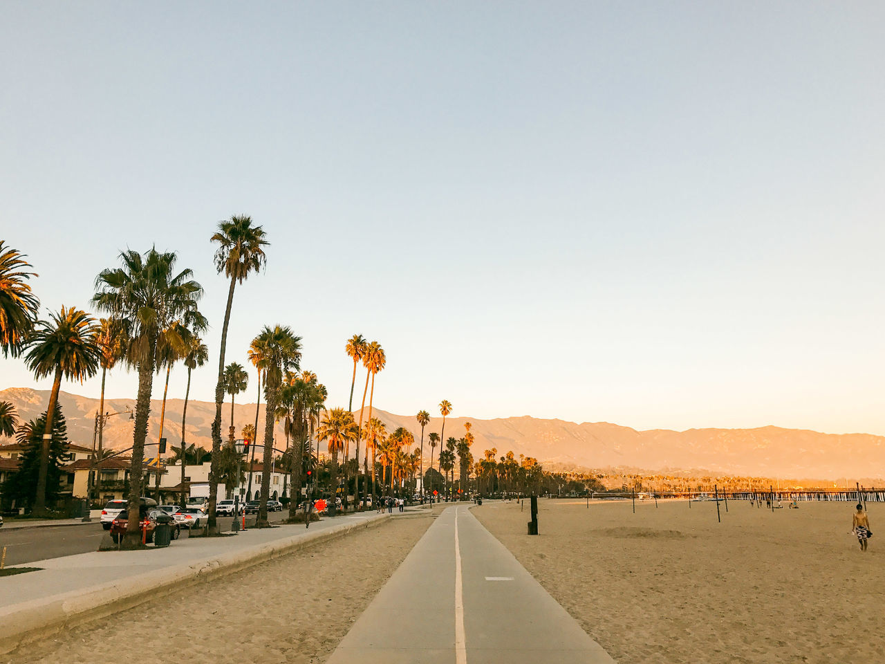 Adult Adults Only Day Nature Outdoors Palm Tree People Santa Barbara Santa Barbara, CA Travel Destinations Tree
