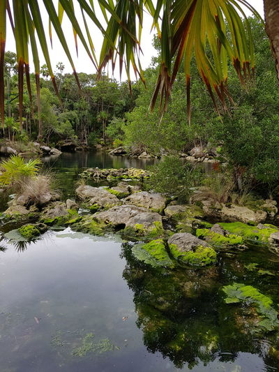 lago verde Lago Verde Piedras Musgo Naturaleza Nature Nature Photography Nature_collection Nature Water Growth Reflection No People Tree Outdoors Beauty In Nature Day Green Color Tranquility Lake Palm Tree Scenics Sky