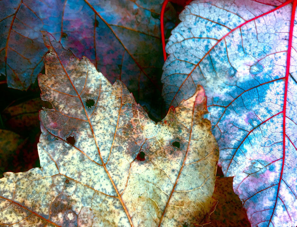 Abstract Abstract Art Abstract Photography Autumn Backgrounds Beauty In Nature Change Cloud - Sky Day Flowers Fragility Graffiti Leaf Leaves Maple Leaf Multi Colored Nature Nature No People Outdoors Scenics Sky And Clouds Statues Tree Words