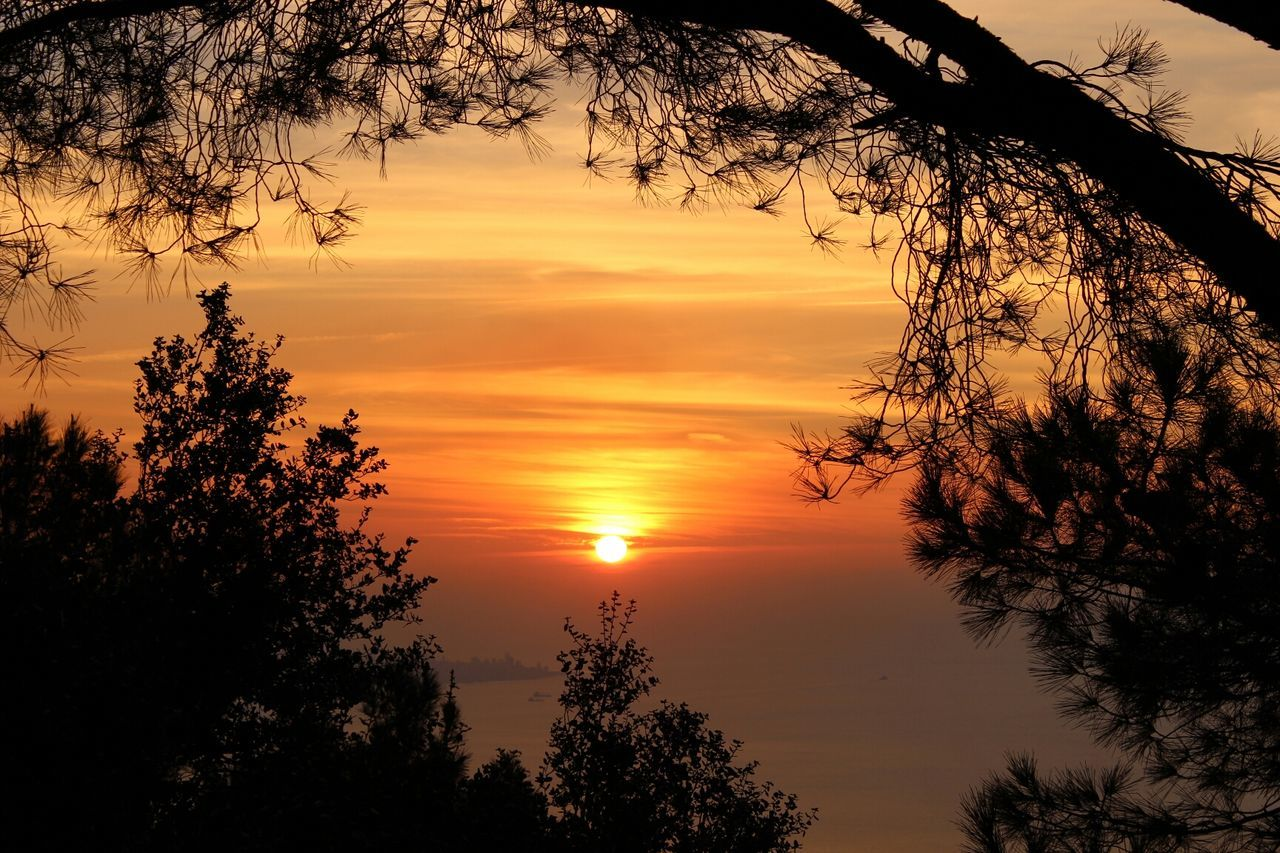Sunset Tree Nature The Environmentalist – 2014 EyeEm Awards Harissa