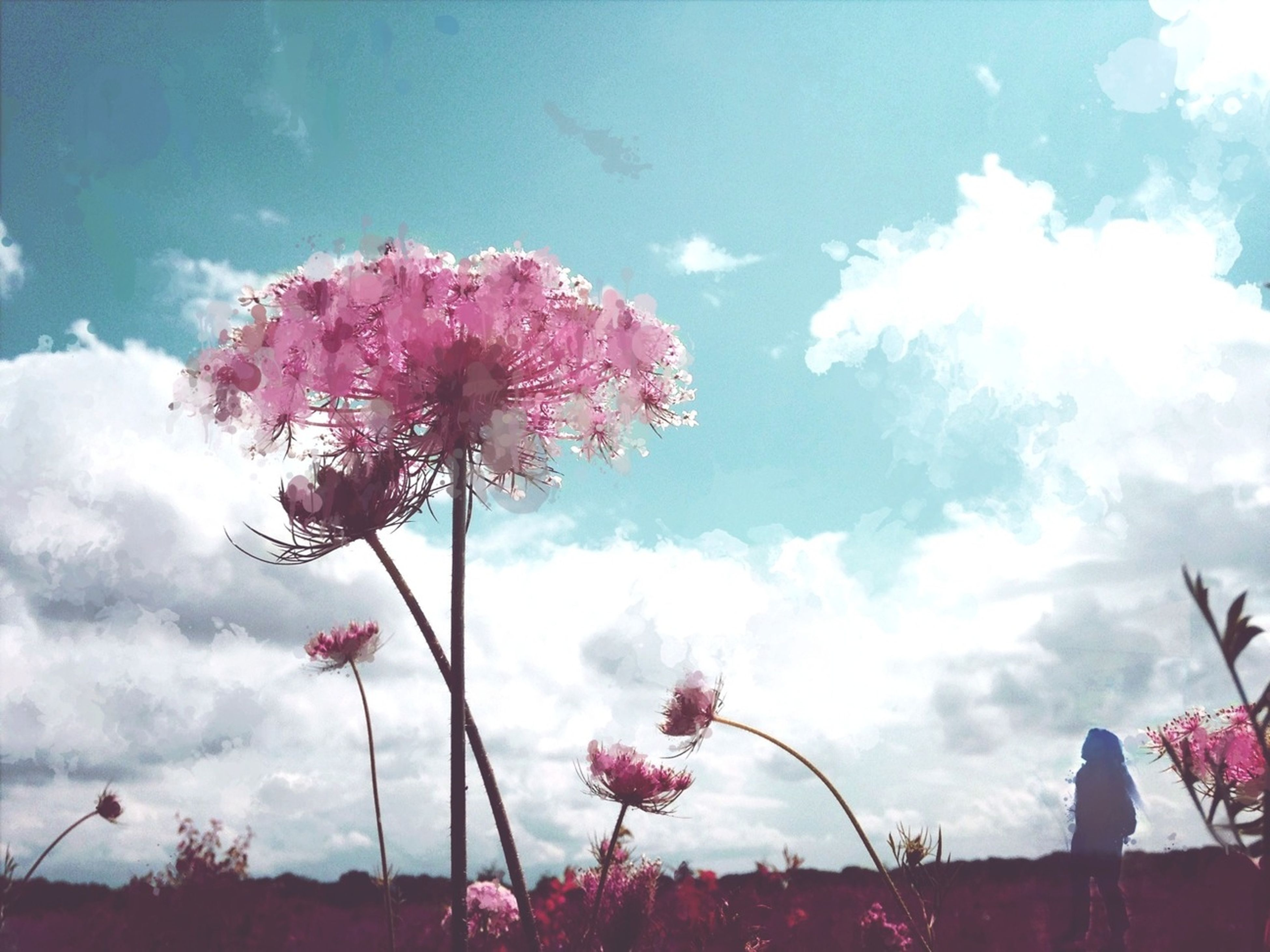 low angle view, sky, flower, cloud - sky, tree, beauty in nature, cloud, silhouette, nature, growth, pink color, cloudy, freshness, fragility, outdoors, day, blue, sunlight, tranquility, no people