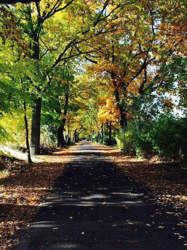 It's autumn! Autumn Autumn Colorful Colour Empty Road Leaves Nature No People Road Senescence Street The Way Forward Tranquility Tree