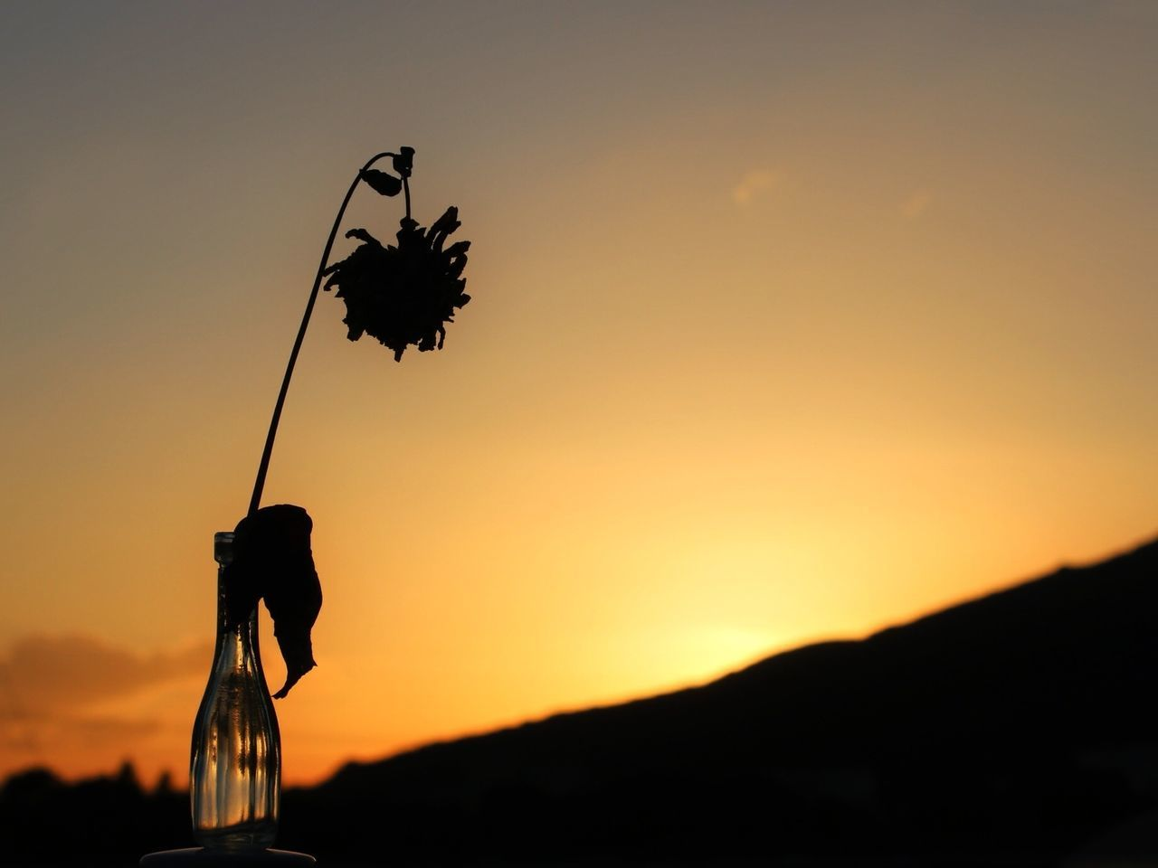 Dead plant in vase at sunset
