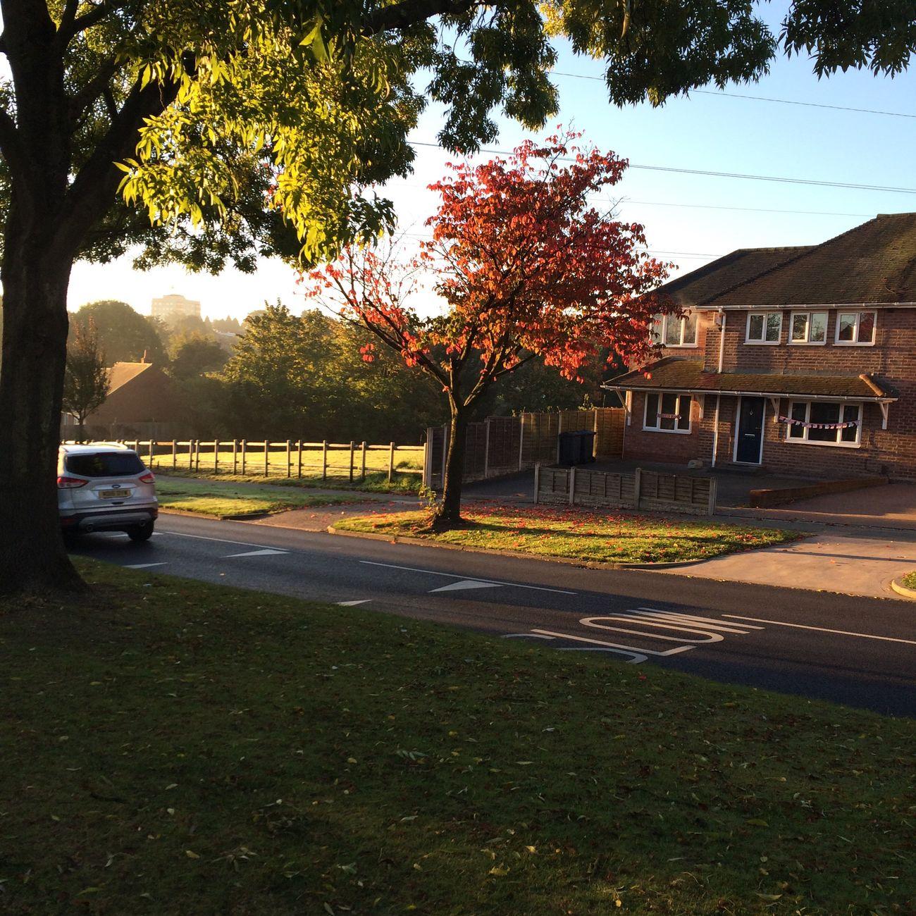 Autumn~🍁🌸 Autumn Suburb Street Morning
