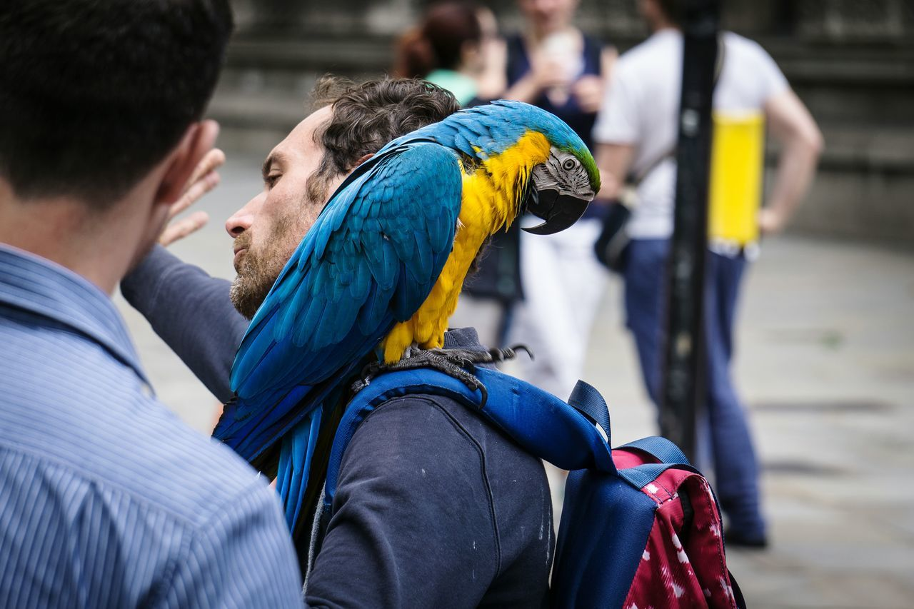 Men Outdoors Adult Bird People Day Pets Close-up Perching Adapted To The City Exclusive Shot Turkishfollowers Uniqueness VSCO Eye4photography  EyeEm Masterclass Showcase: January Check This Out Daily Commute Parrot Parrots Of Eyeem Parrot Lover Multi Colored Animal Themes Unique The Street Photographer - 2017 EyeEm Awards