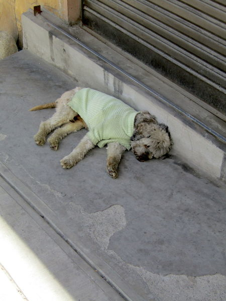 Sleeping dog in sweater. La Paz, Bolivia. Sleeping Dog Animal Themes Bad Taste Day Dog Domestic Animals Fashion Police High Angle View In The Shade Lying Down Mammal No People One Animal Outdoors Pets Relaxation Sleeping Sweater