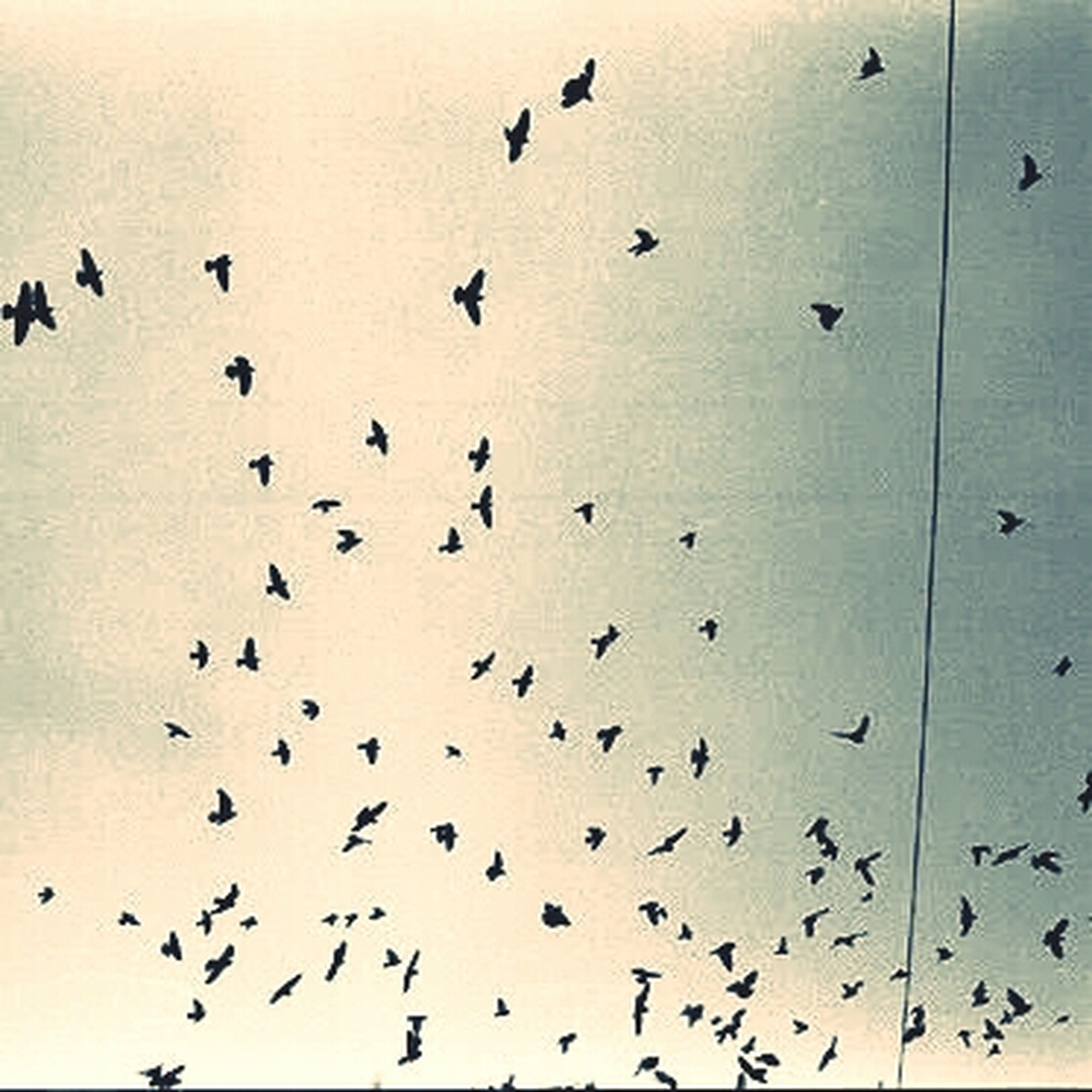 bird, flock of birds, animal themes, animals in the wild, flying, wildlife, low angle view, indoors, silhouette, sky, backgrounds, nature, day, full frame, no people, abundance, built structure, in a row