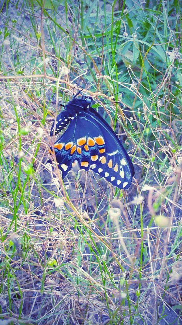 Natureonyourdoorstep EyeEm Nature Lover Nature_collection Enjoying Nature Butterfly