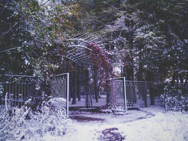 Leaves On Snow Summer-winter Park Winter Park