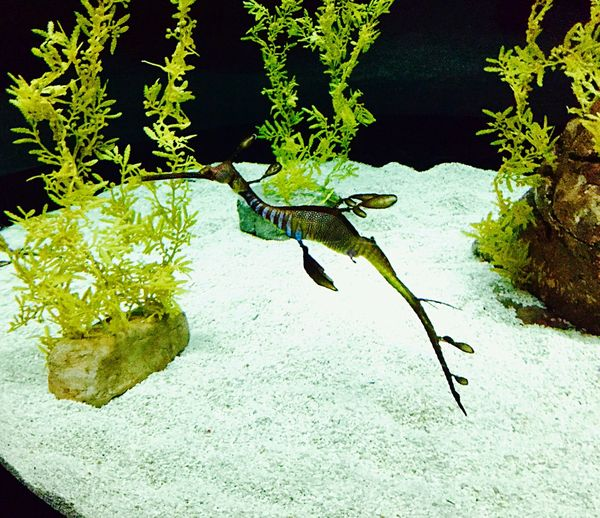 Photos That Will Restore Your Faith In Humanity The Beauty Of Nature Sea Dragon in Oceanário Lisboa Portugal The Nature Perfection Delicacy Science Of Care