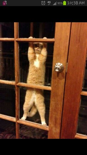 """hies like """"please let mie in...ill bie good""""...lolz"""