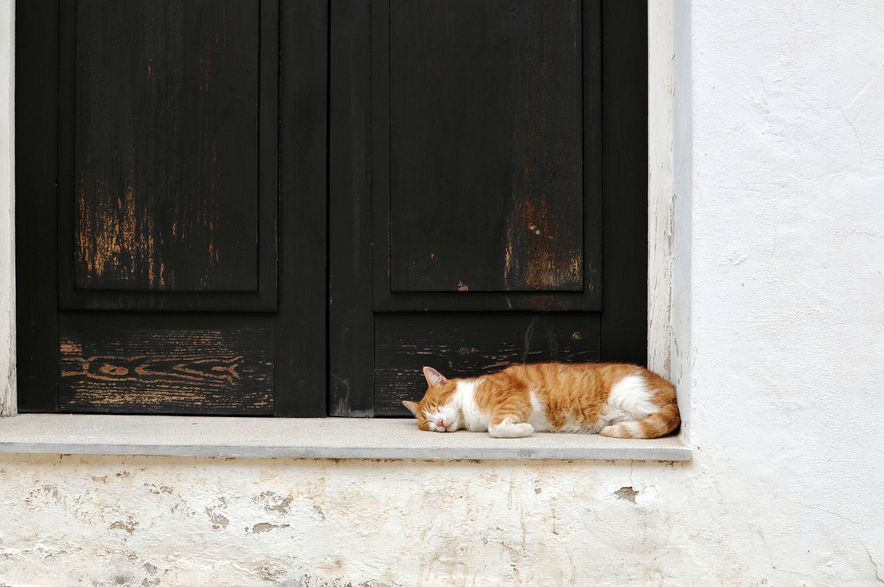animal themes, one animal, domestic animals, mammal, pets, door, domestic cat, window, day, feline, no people, built structure, outdoors, architecture