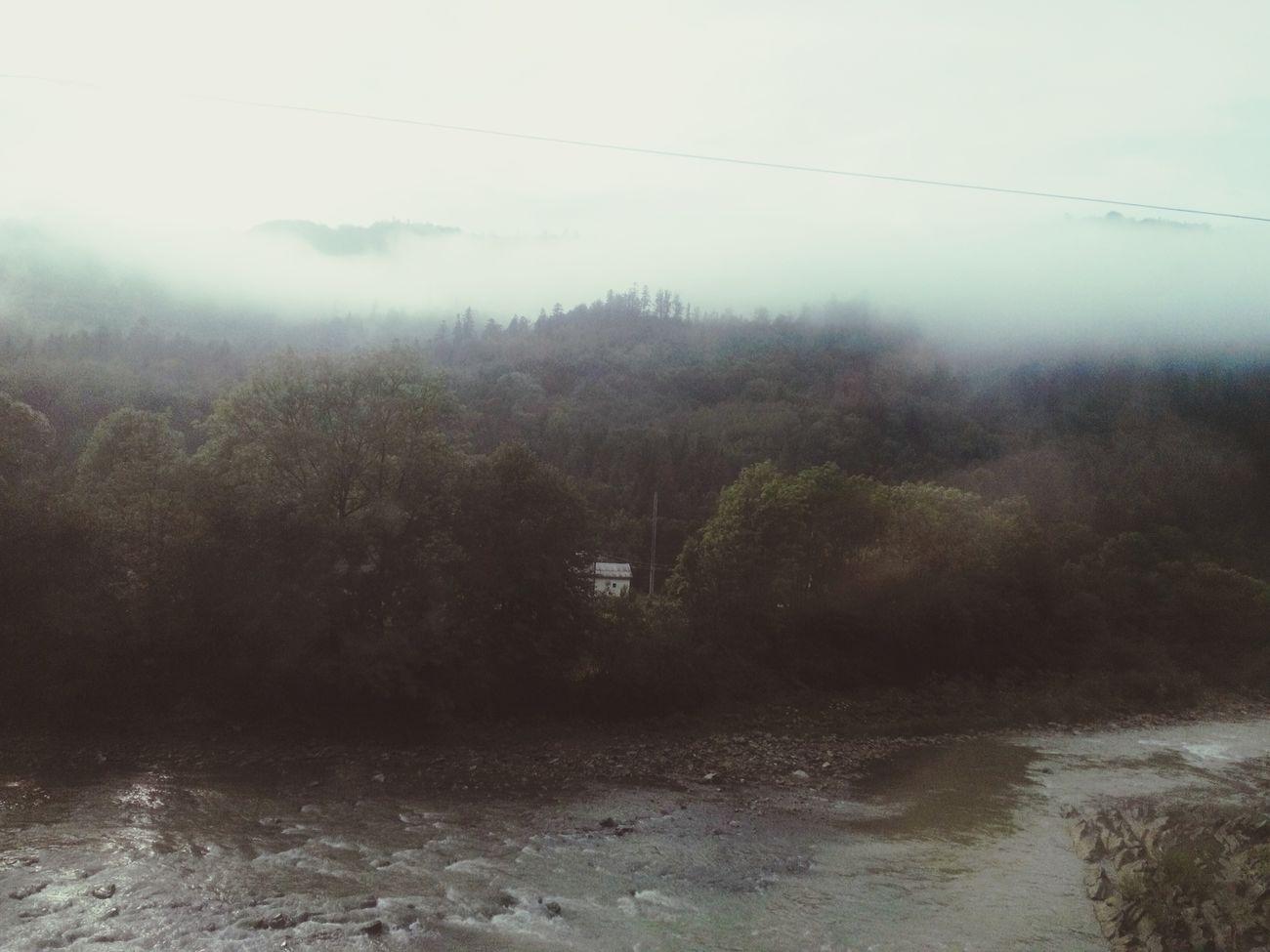 Where Do You Swarm? Mountains Karpathian