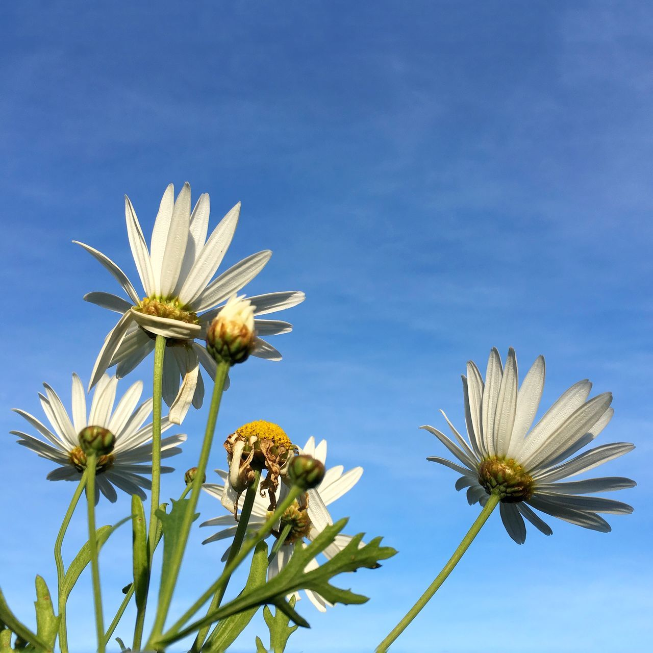 Low Angle View Of White Flowers Blooming Outdoors
