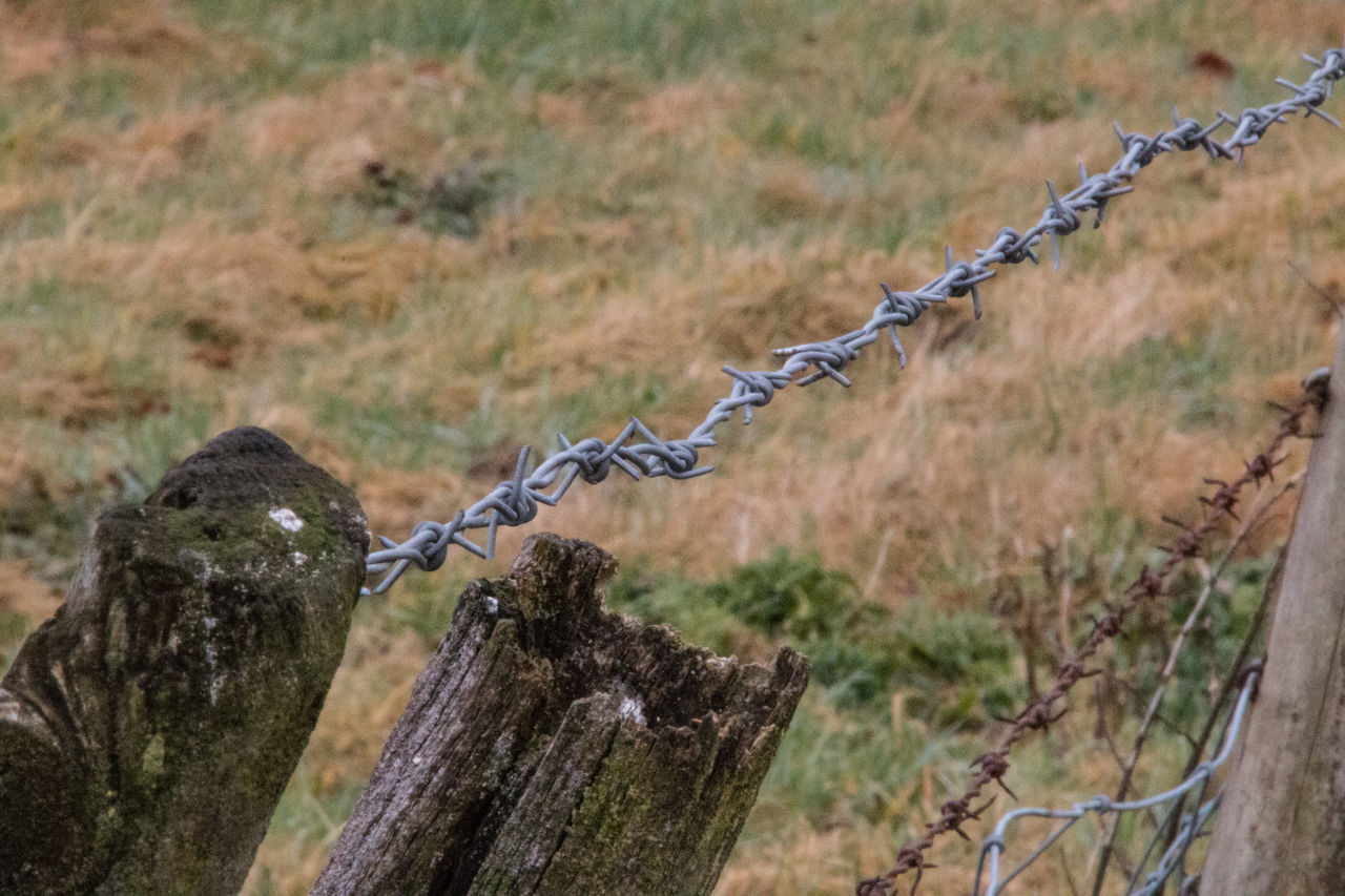 protection, metal, safety, security, barbed wire, focus on foreground, no people, day, outdoors, close-up, grass
