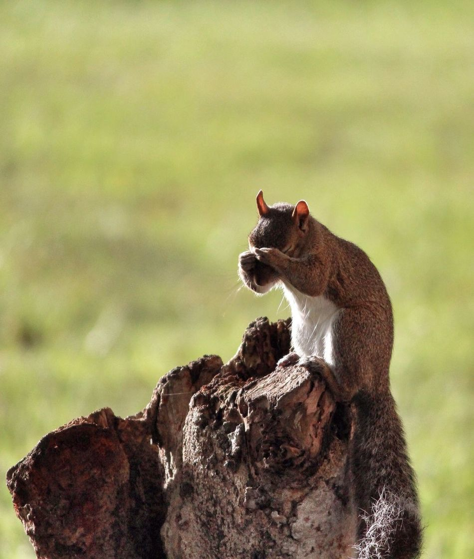 Beautiful stock photos of squirrel, Animal In The Wild, Animal Themes, Day, Eyes Closed