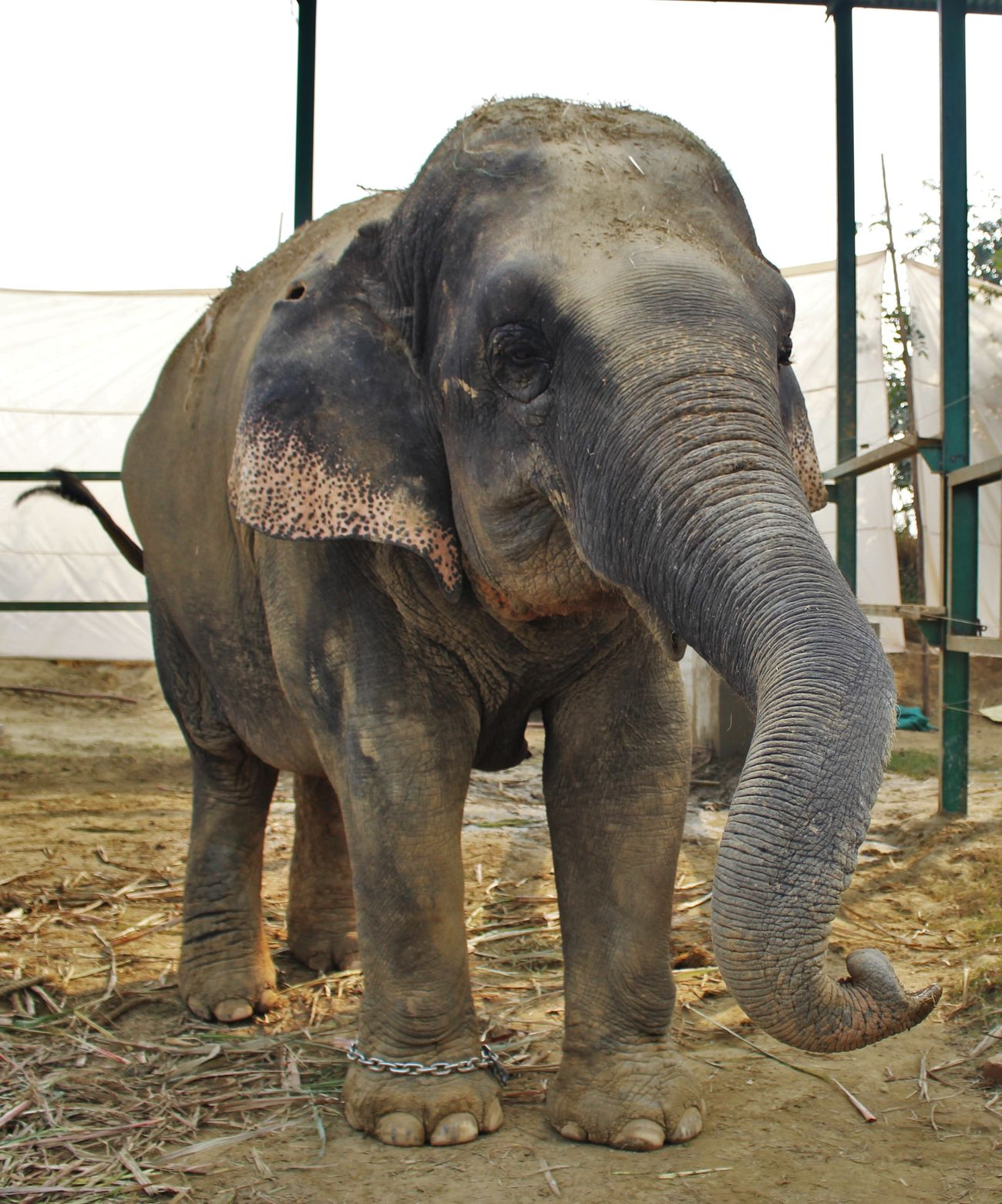 Animal Sanctuary Animal Themes Animal Trunk Animal Wildlife Animals In The Wild Day Elephant India Mammal Nature No People One Animal Outdoors Rescue Animals Sky