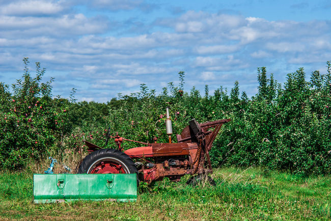 Apple Orchard Beauty In Nature Building Exterior Built Structure Cloud Cloud - Sky Day Field Grass Green Color Growth House Landscape Nature Northampton MA Outdoors Plant Rural Scene Sky Tractor Tranquil Scene Tranquility Tree Lamdscapes With Whitewall