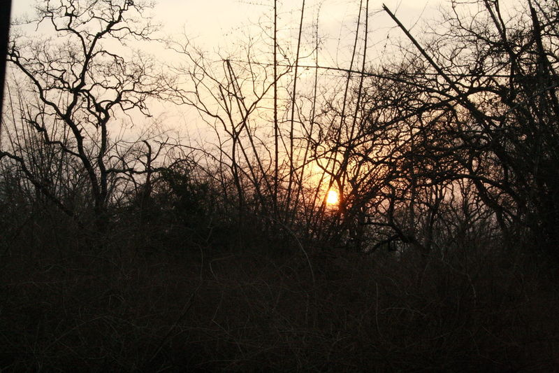Bare Tree Beauty In Nature Branch Day Growth Nature No People Outdoors Scenics Sky Sunset Tranquil Scene Tranquility Tree