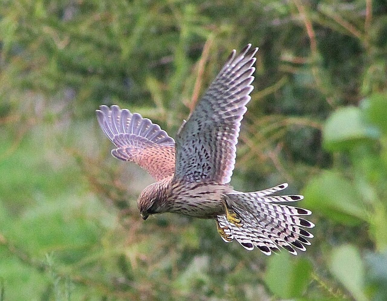 Unedited Photo Unedited Kestrel Top Of The Food Chain Taking Photos Check This Out Nature Birds Enjoying Life Cellphone Photography Fields