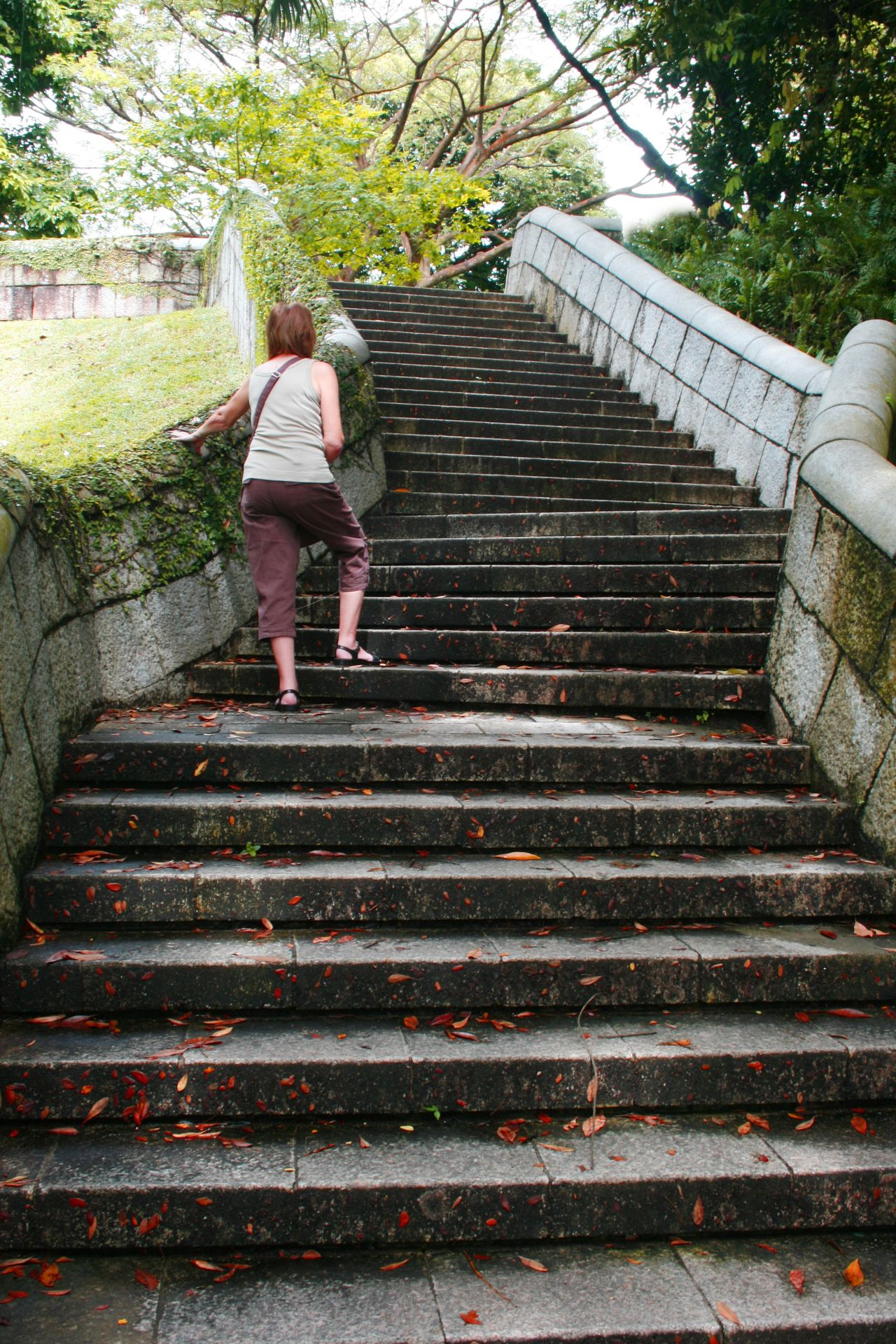 Its hard work for this woman climbing a long set of leaf covered steps Adult Adults Only Architecture Climb Up Climbing Day Full Length Middle Aged Woman Nature One Person Outdoors People Rear View Staircase Steps Steps And Staircases Tiring Travel Travel Destinations Tree Walking