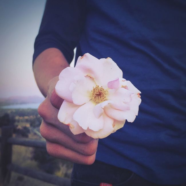 A beautiful light pink rose to show his love Forever Alwayshandedflowers Rosé Whiterose Pink Cute