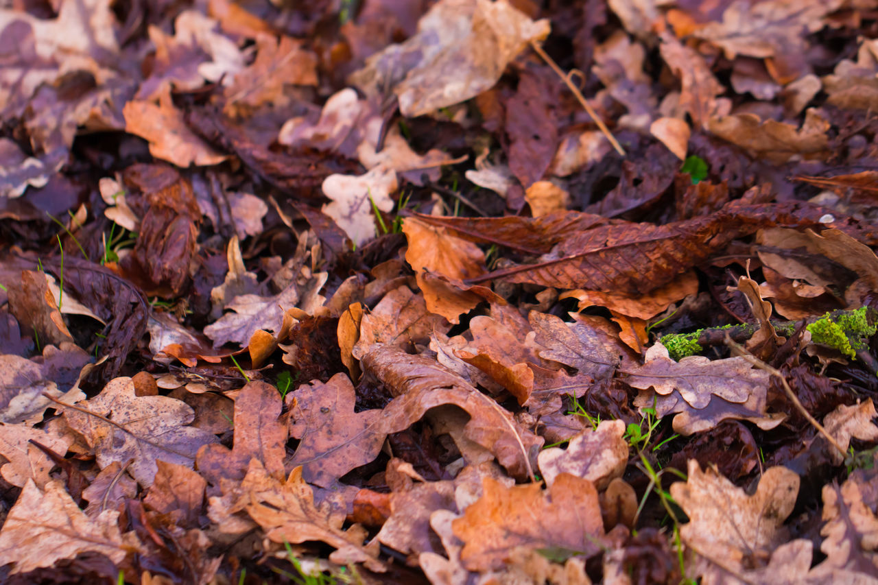 Autumn Backgrounds Beauty In Nature Change Close-up Day Dry Fragility Full Frame Large Group Of Objects Leaf Leaves Many Maple Maple Leaf Nature No People Outdoors