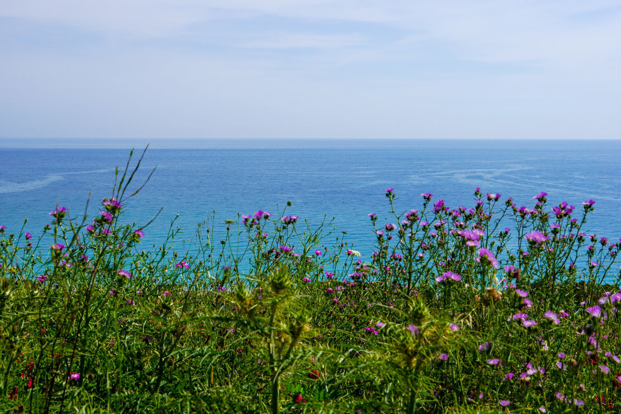 Beauty In Nature Blooming Blue Calabria Calabria (Italy) Calabriadascoprire Day Flower Fragility Freshness Growing Growth Horizon Over Water Idyllic In Bloom Nature Outdoors Plant Scenics Sea Sea And Sky Sky Tranquil Scene Tranquility Water