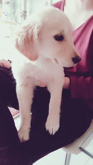 Goodmorning Love Pets DogLove