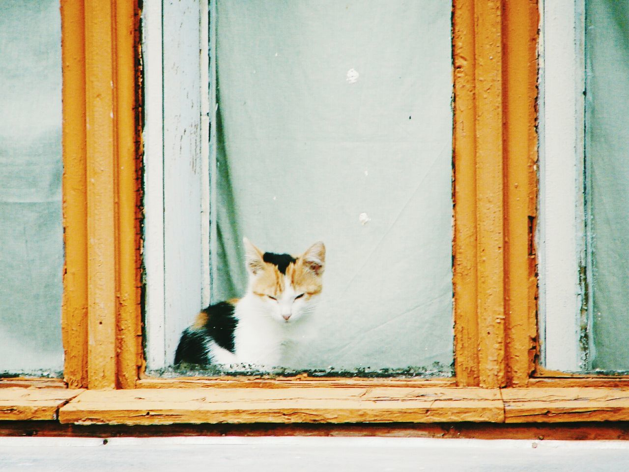 Domestic Cat Pets Domestic Animals One Animal Animal Themes Feline Looking At Camera Tortoiseshell Cat No People Day Outdoors In The Window Looking Into A Window