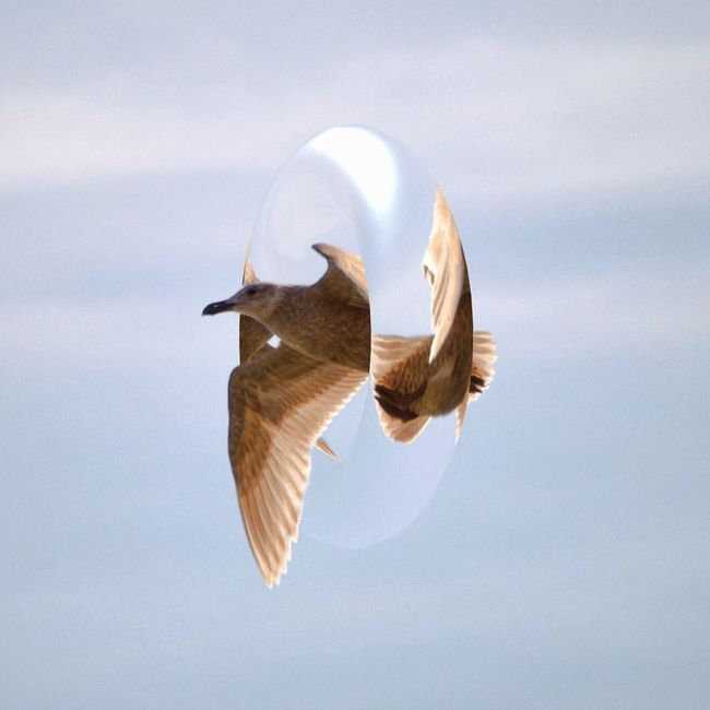 Bird Flying Tranquility Nature Blue Sky Water Bird Flight No People Day One Animal Abstract Crystal Loop