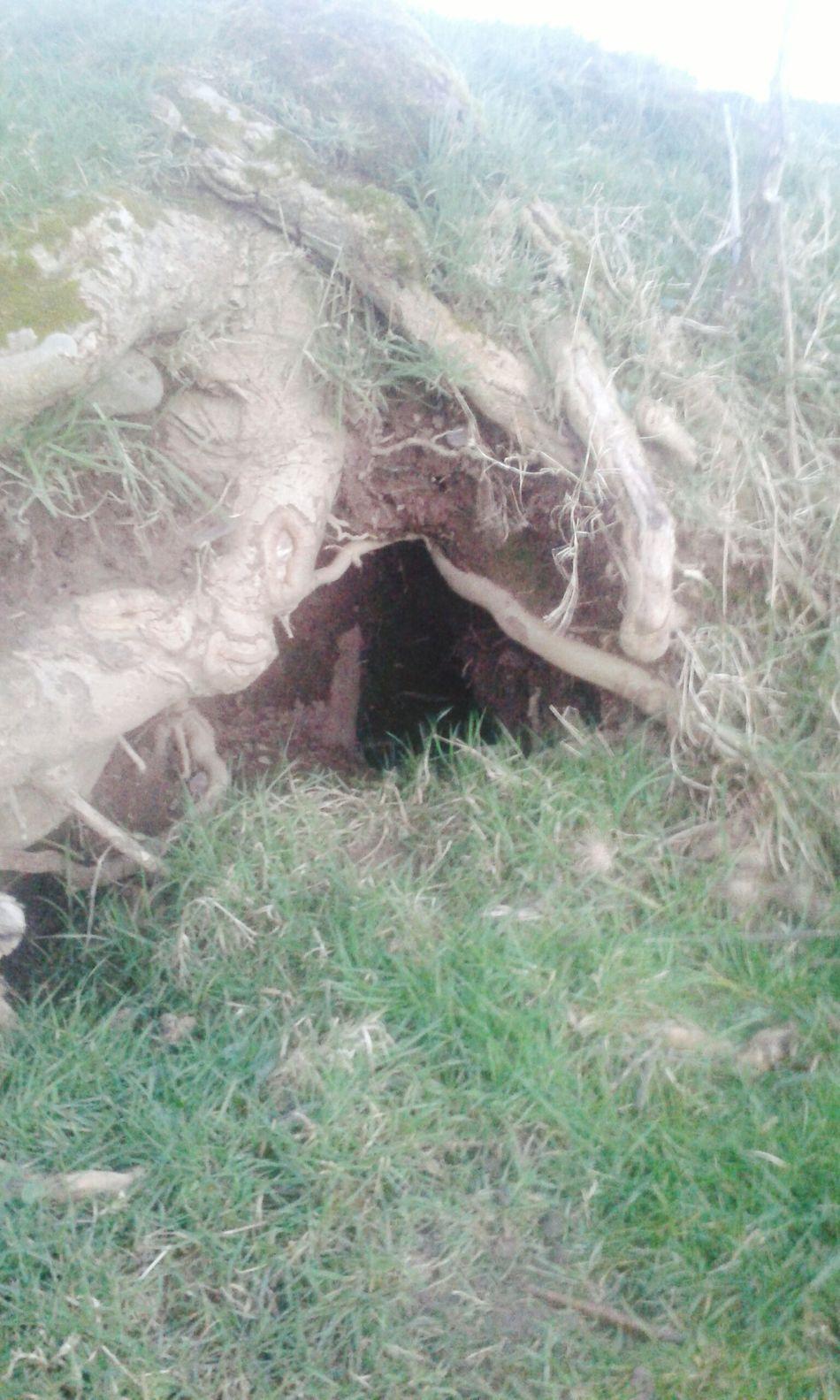 Mr Rabbit Rabbit Hole Nature_collection Eyeemphoto Nature Hi! OpenEdit Eye Em Nature Lover