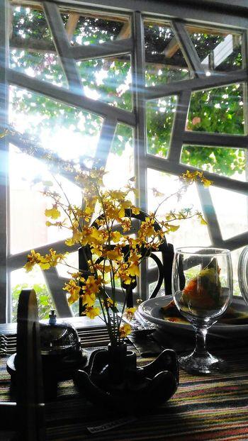 Orchid Dancing Lady Yellow Flower Windowpane